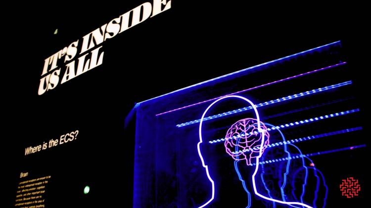 mindmed raises prior to IPO